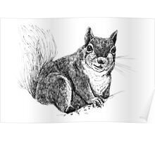 Squirrel drawing Poster