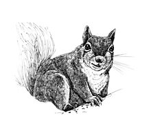Squirrel drawing Photographic Print
