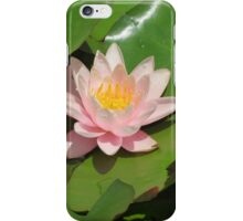Pink Lily Flower iPhone Case/Skin