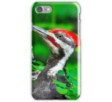 Pileated woodpecker iPhone Case/Skin