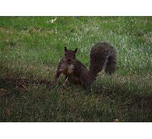 Fluffy Fun Squirrel  Photographic Print