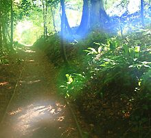 Helios Path.Stackpole,Pembrokeshire by rennaisance