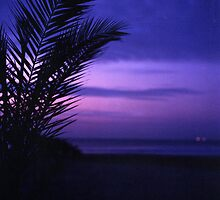Palm tree on beach Ibiza silhouette against dusk sunset sky square medium format film analogue photos by edwardolive
