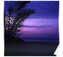 Palm tree on beach Ibiza silhouette against dusk sunset sky square medium format film analogue photos Poster