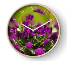 Purple pansies flowering plants Clock
