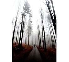 the forrest  Photographic Print