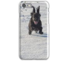 Black cocker spaniel in snow iPhone Case/Skin