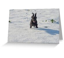 Black cocker spaniel in snow Greeting Card