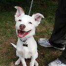 Eddie, the happiest dog in the world by Matt Mawson