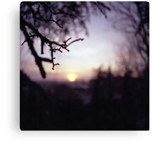 Tree branch in silhouette against sunset dusk evening sky square medium format film analog photographers Canvas Print
