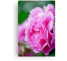 So Soft Pink Canvas Print