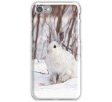 Snowshoe hare (Lepus americanus) in winter iPhone Case/Skin