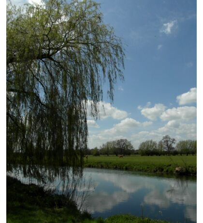 Weeping Willow Over the River Sticker