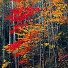 TREES,AUTUMN by Chuck Wickham