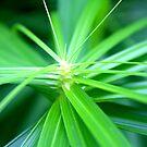 Green is good. by Jennifer Bishop