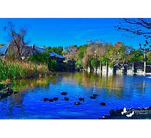 Duck Pond at Alligator Adventure Photographic Print