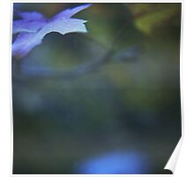 Leaves in blue square medium format film analog photographs Poster