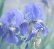 Painted Blue Irises 1 by JennyRainbow