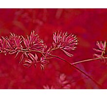 red art Photographic Print