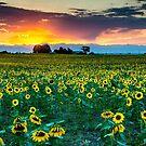 A Colorado Eden by John  De Bord Photography