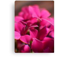 Tiny Magenta Blossoms Canvas Print