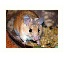 Curious Hamster Art Print