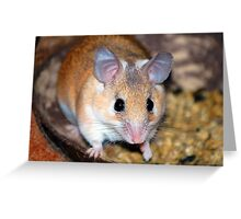 Curious Hamster Greeting Card