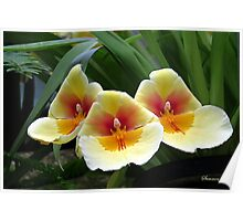 Every Day Is Our Best Day ~ Orchids Poster