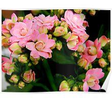 Garden Flowers   ^ Poster