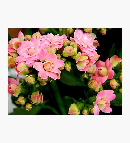 Garden Flowers   ^ Photographic Print