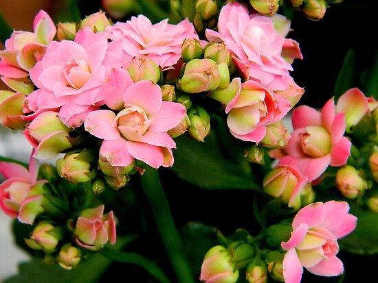 Garden Flowers   ^ by ctheworld