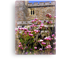 Pink Magnolia at Powderham Castle Canvas Print