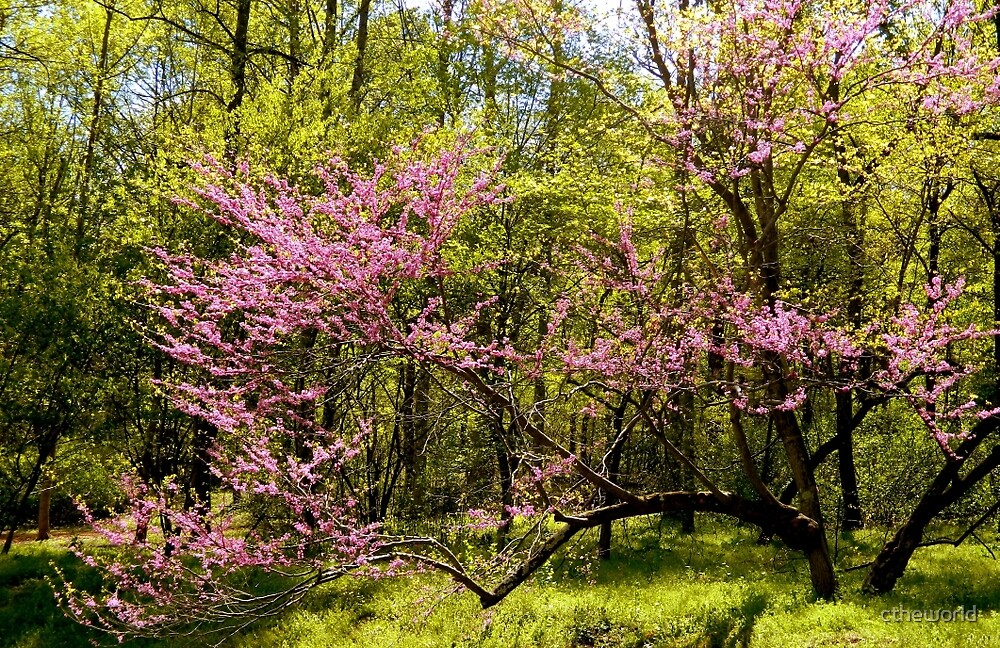 Country Scene - A Graceful Spring in Virginia   ^ by ctheworld