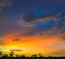 Acacia Sunset by Tammy  Timm