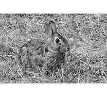 Bunny! Photographic Print
