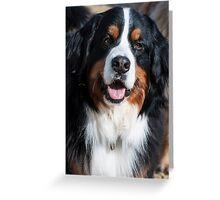 Happy Female Bernese Mountain Dog Greeting Card