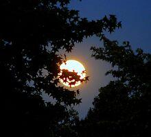 Bashful Moon   ^ by ctheworld