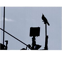Bird Singing On A Boat Photographic Print