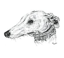 No.1 lurcher girl Photographic Print