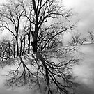 Trees and Sky Reflected by Lisa Cook