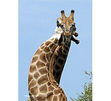 WHEN GIANTS COLLIDE - GIRAFFE – Giraffa Camelopardalis (KAMEELPERD) Photographic Print