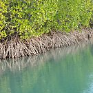 Mangrove Magic by Jenny Dean