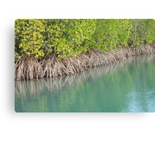 Mangrove Magic Canvas Print
