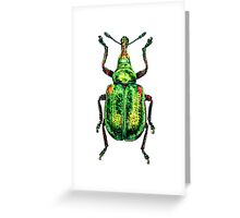 Green Weevil beetle Greeting Card