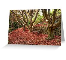 Autumn Leaves - The Secret Garden #3 - Mount Wilson NSW - The HDR Experience Greeting Card