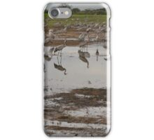 Cranes reflecting on the water  iPhone Case/Skin