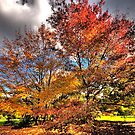 Autumn Glory - Mount Wilson, NSW - The HDR Experience by Philip Johnson