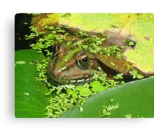 Frog in the Pond Canvas Print