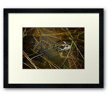 Iberian Green Frog Framed Print