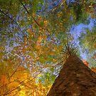 Colours of autumn by Ranald